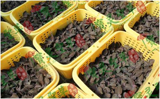 贵州中科农经生物科技有限公司  宝灵圣草金线莲种植详解