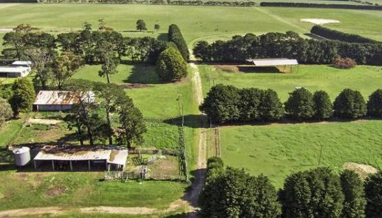 买家眼睛更绿色的牧场 确保在吉朗周围的小农场