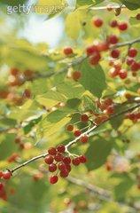 年轻的家庭在Mt Gisborne Cherries农场上花了120多万美元