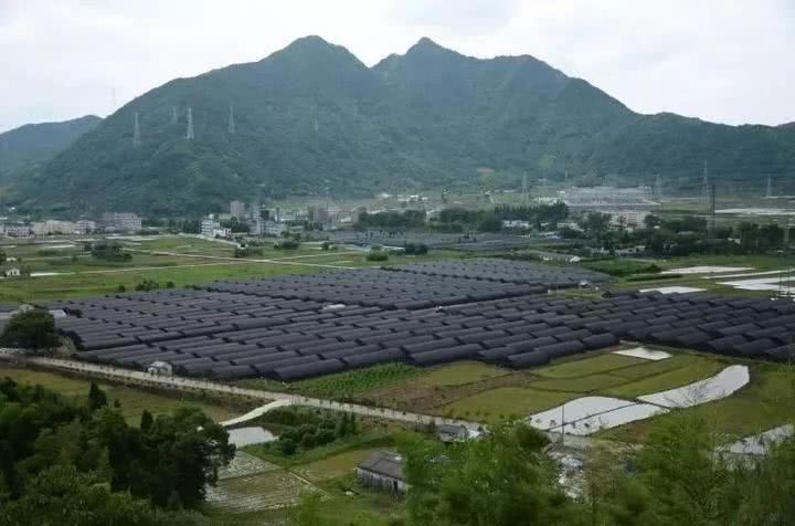 浙江评选出24个省级现代农业园区和35个特色农业强镇创建对象