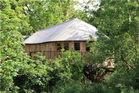 汤姆普特在莫宁顿半岛的树屋生活