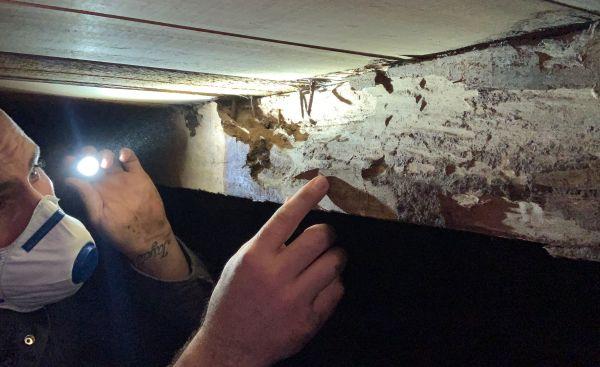 检查员报告墨尔本的受白蚁所困的房产飙升