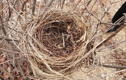 筑巢鸟类可能会对您的房屋造成更大的损害