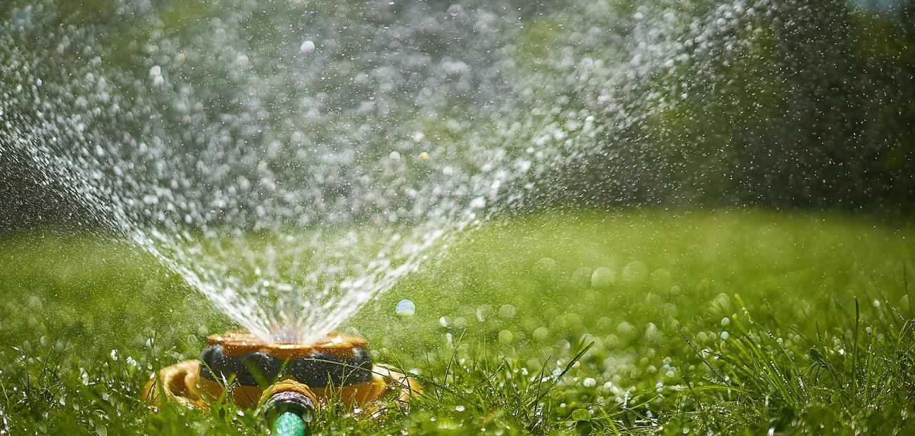 你什么时候给你的草坪浇水